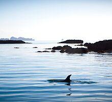 Dolphin Rocks by StephanieAnn88