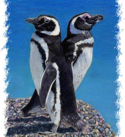 Cute Penguins T-Shirt Sticker