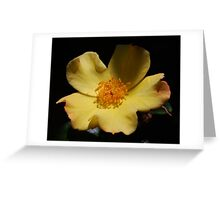 Yellow Simplex Rose Greeting Card