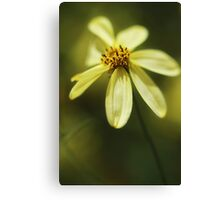 Soft and Yellow Canvas Print