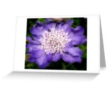 Soft Touch Of Purple Greeting Card