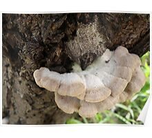 White and Pink Fungus Poster