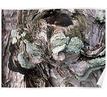 Green Lichen  Poster