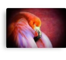 Softly sleeping Canvas Print