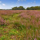 On the large silent heath...... by Adri  Padmos