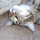 Sweety Cat In The Garden by Bearie23