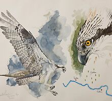Glentress ospreys by threefishes