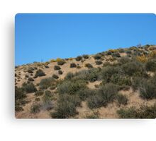 Hiking In The San Bernardino Mountains Canvas Print
