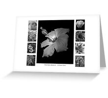 Pretty Petals II Black and White Greeting Card