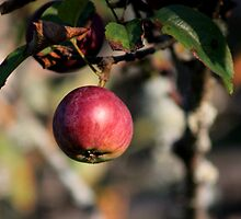 A Dash of Apple by Kathleen Daley