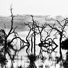 Lake Cawndilla by Belinda  Churchill