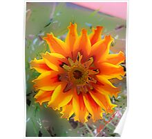 Spring Color- Orange Flower  Poster
