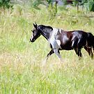Painted Pony by © Loree McComb