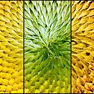 Sunflower Heart Triptych by Lisa Knechtel