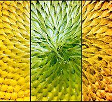 Sunflower Heart Triptych by Lisa Knechtel