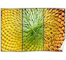Sunflower Heart Triptych Poster