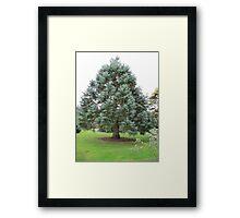 nice tree in arboretum Het Leen  Framed Print