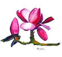 """Marwood Spring"" Magnolia Watercolor Photographic Print"