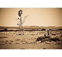 Mutonia Sculptures, Alberrie Creek - South Australia Photographic Print