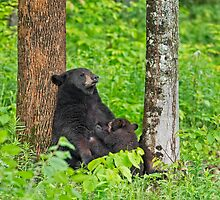 Mama bear and Baby bear by Daniel  Parent