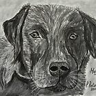 Hagar the Labrador! by Pieta Pieterse
