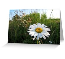 Summer Rhapsody Greeting Card