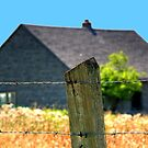The Fenced!!! by Larry Trupp