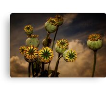 Poppy Pods Canvas Print
