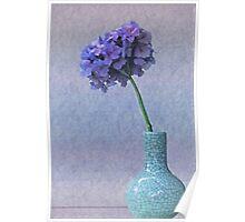 Blue and purple hydrangea in craquelé vase Poster