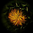 The Mysterious Sunflower by Jonice