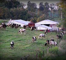 Farm fond memories  by Tammy Devoll