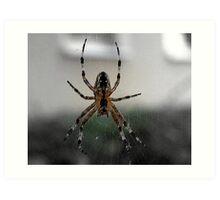 SPIDER WAITING Art Print