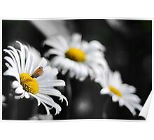 Butterfly over a composition of Daisies Poster