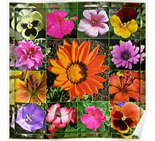 Sunlit Summer Flowers Collage Poster
