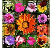 Sunlit Summer Flowers Collage Photographic Print