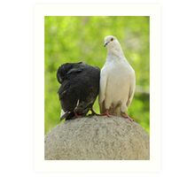 two wild pigeons sitting on a stone ball Art Print