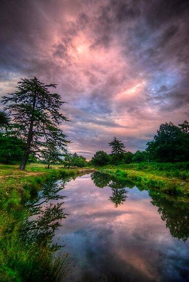 Pink Flow by Yhun Suarez
