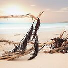 Driftwood  by Melissa Dickson