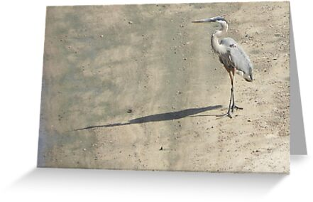 Heron on Arkansas River by bannercgtl10