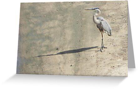 Heron on Arkansas River by bannercgtl10