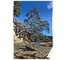 Waimama Bay Lone Rock Poster