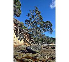 Waimama Bay Lone Rock Photographic Print