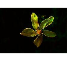 Yellow Radiation Of The Antares Photographic Print