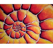 Shell series- abstraction of spirals Photographic Print