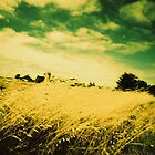 champs de blé, ile d'arz, morbihan by busteradams