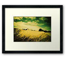 champs de blé, ile d'arz, morbihan Framed Print