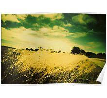 champs de blé, ile d'arz, morbihan Poster