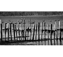 ruralscapes #118, behind fences Photographic Print