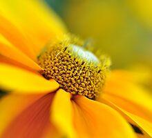 Flower Power by Shubd