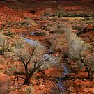 Desert Colors by Cyn  Valentine